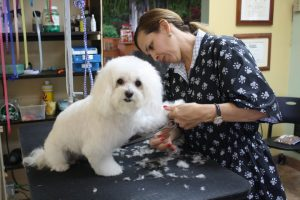 getting a groom to go home after staying at this pet hotel in miami
