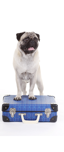 dog_boarding