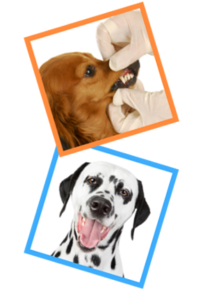 dog_dental_cleaning_miami