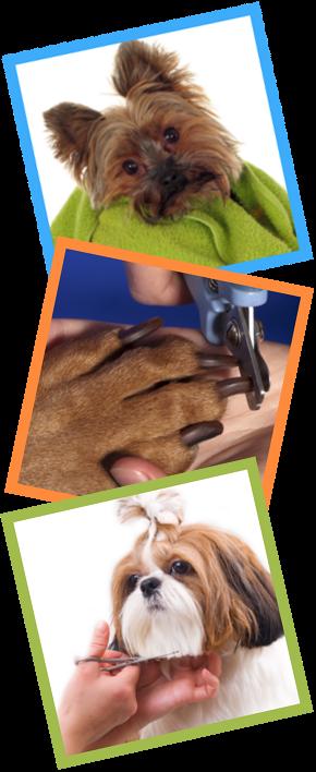 grooming_testing