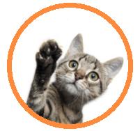 pet_hotel_prices_cat