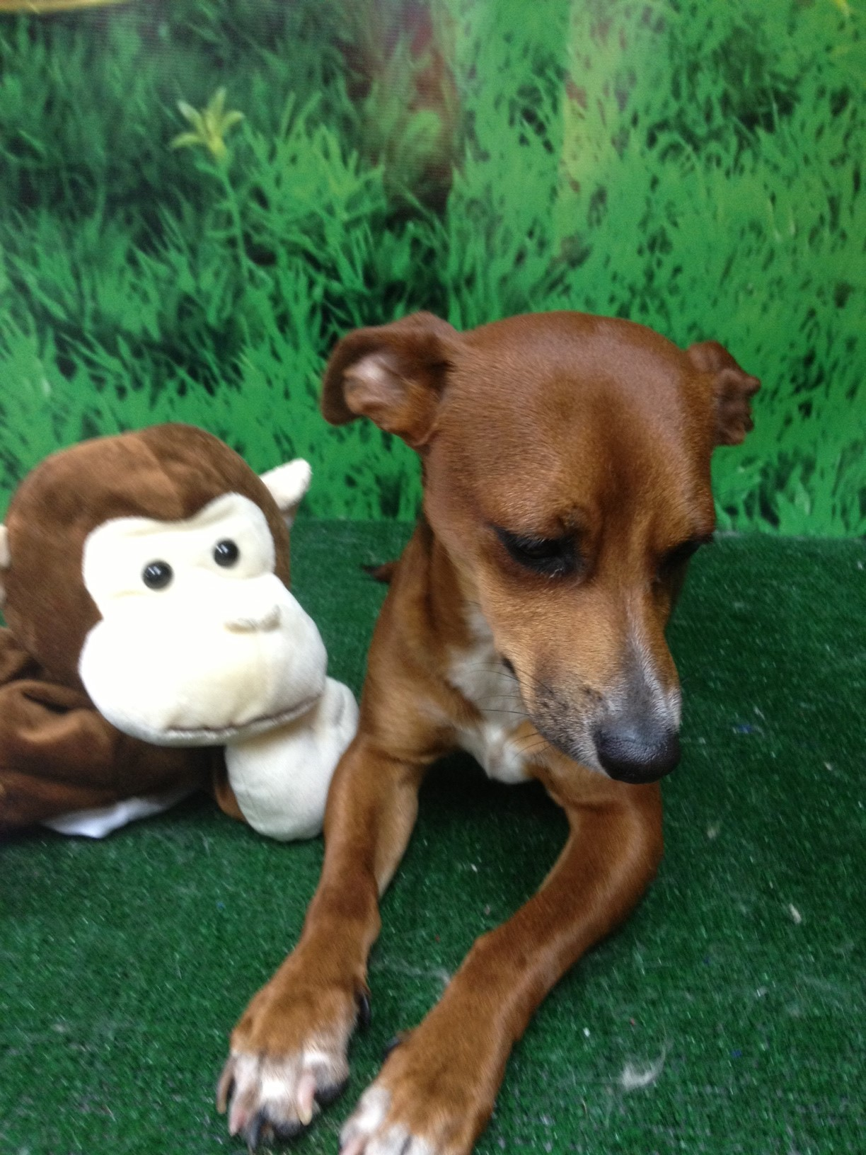 pepito is a dog that needs a home