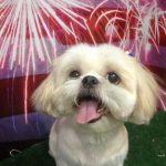 pets from Aventura stay at our pet hotel