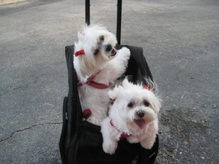 Why It's Usually Best To Leave Your Pet At A Resort Rather Than With A Friend