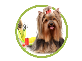 pet hotel in miami + grooming