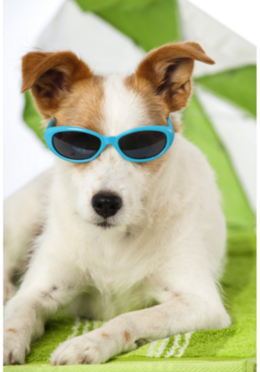 A Step-by-Step Guide On How To Find The Perfect Pet Hotel