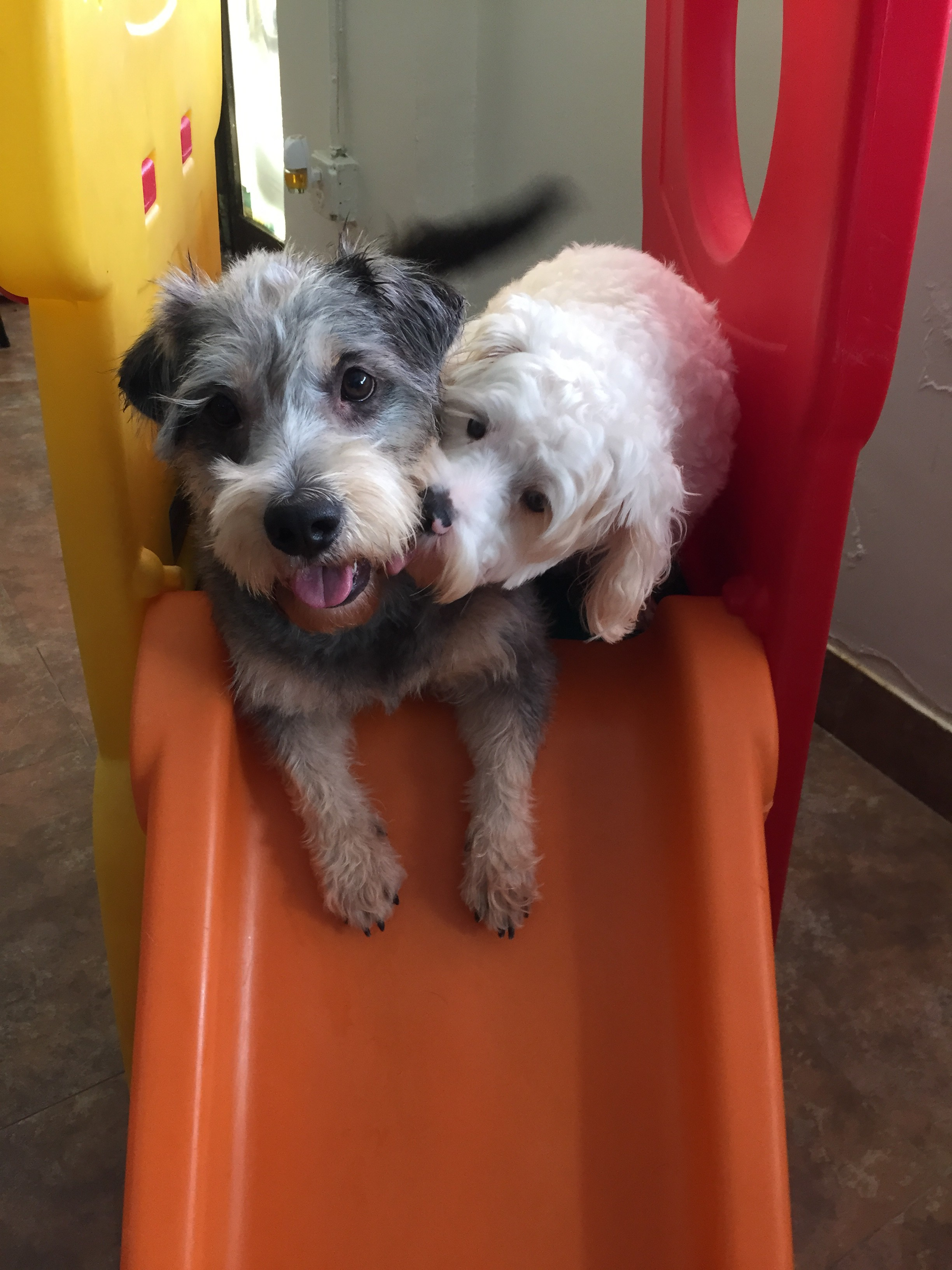 Dogs Having Fun At Our Pet Hotel In Miami
