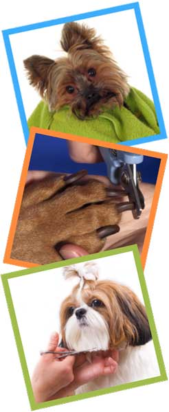 Best Pet Grooming in Miami