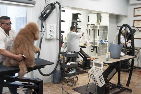 Pet Grooming In Miami