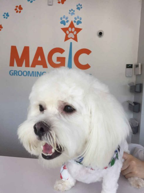 Magic Grooming