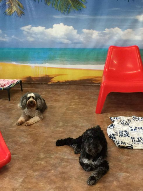Magic Grooming Miami Pet Hotel